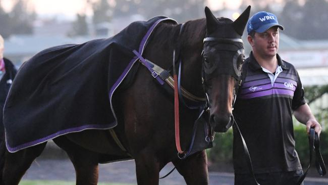 Winx has returned to Chris Waller's Rosehill stables to begin preparations for her spring campaign. Picture: AAP