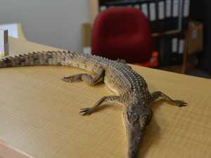 Croc found dead in Townsville CBD