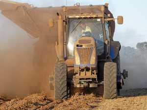 WATCH: Peanut crop from paddock to processor