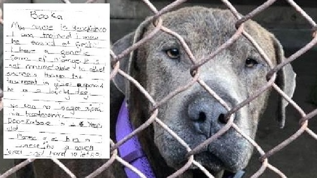 Booka was left at a Sydney RSPCA shelter with a heartbreaking note