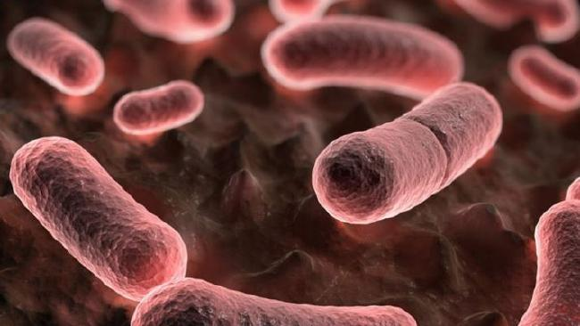 Modern antibiotics can treat the plague, but if they're not administered quickly, it can lead to death. Picture: Supplied