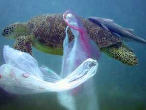 Plastic bag ban: What you need to know