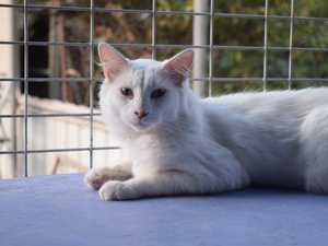 FELINE FRIEND: Bunny is looking for a new home and
