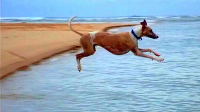 JUMP: Zippy diving into Boambee Creek.