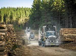 Funding boost for timber industry proves divisive