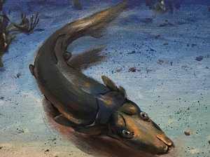 Mysterious sea creature revealed
