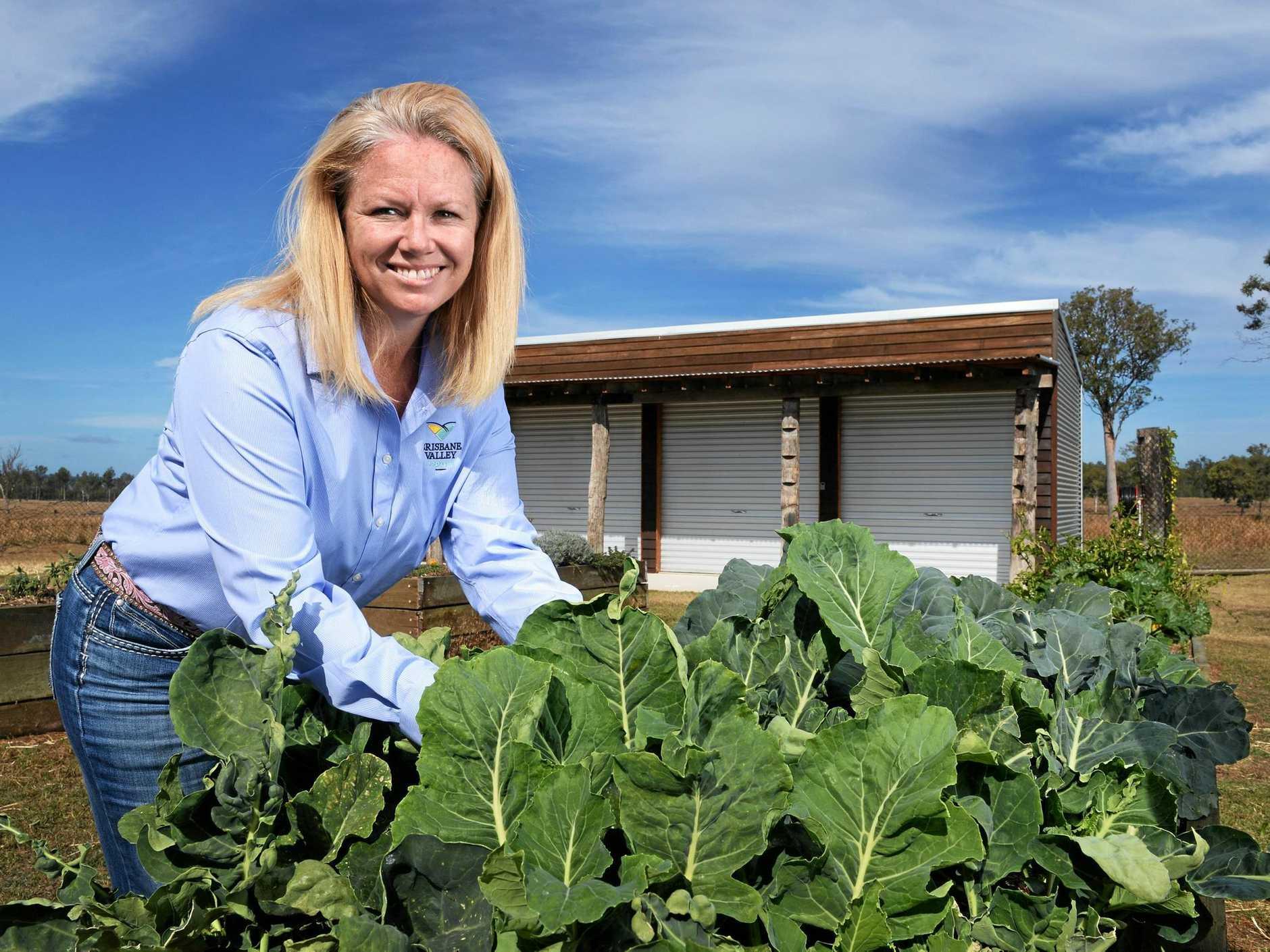HAND PICKED: Dallas Rumbelow tends to the community garden at Brisbane Valley Protein Precinct.