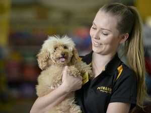 Doggie day lifts mood for city's workers