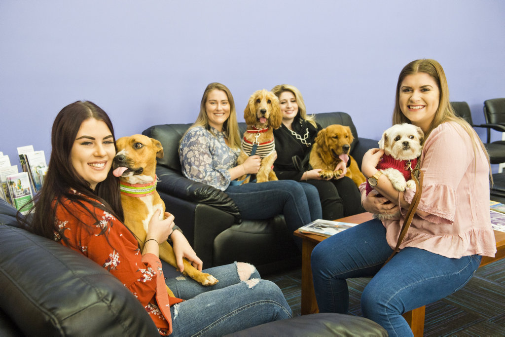 (From left) Wizard, Rebekah Grott, Alfred, Sarah-Jane Macdonald, Georgia Soutar, Ruby, Ashleigh Wegner and Sophie enjoy the company of their dogs at work. Friday, 22nd Jun, 2018.