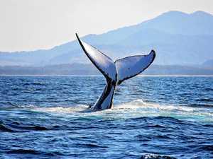 Must-see giants of the ocean