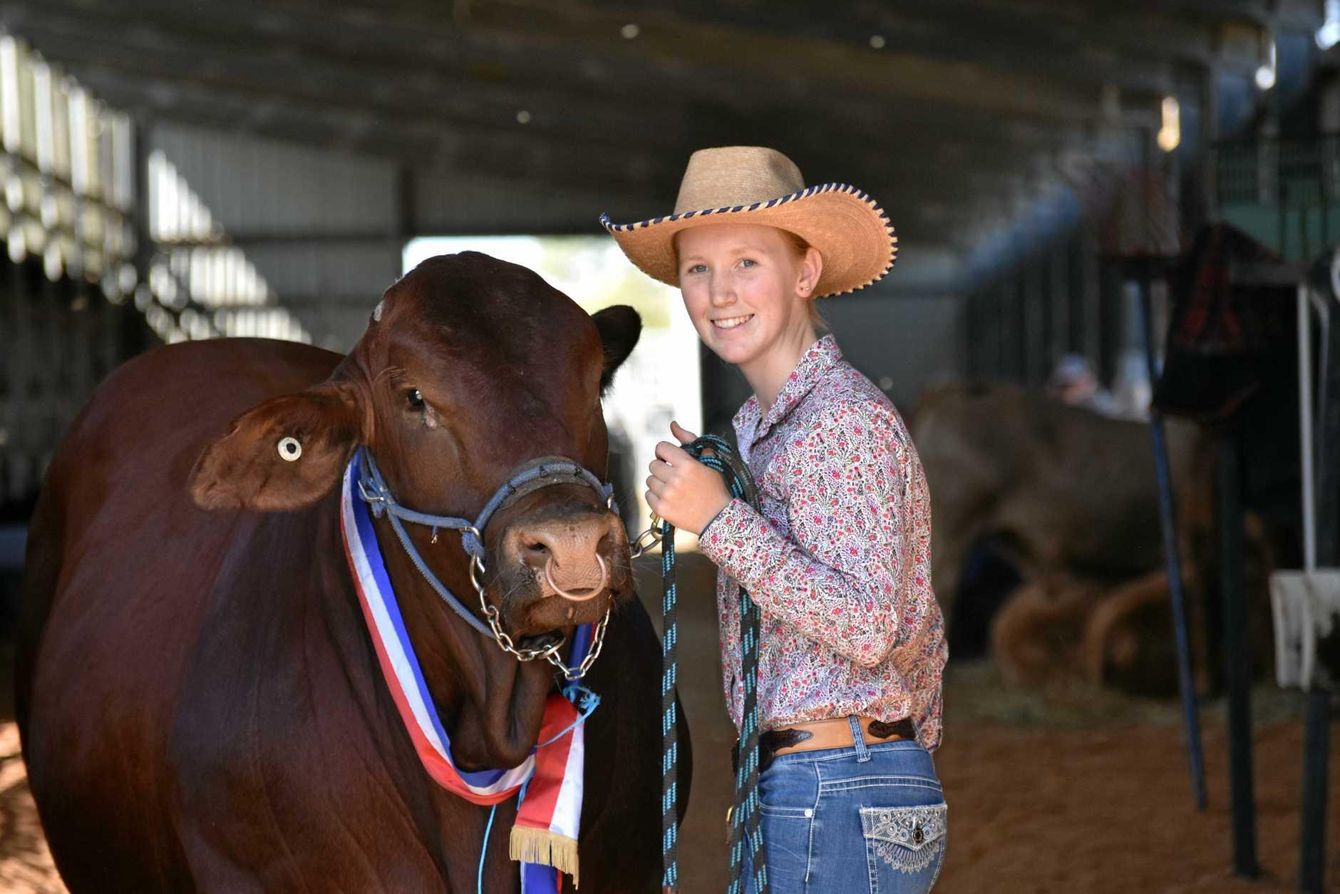 Rockhampton Agricultural Show Supreme Champion Bull Bilo High Commando with leader Candice Rideout.