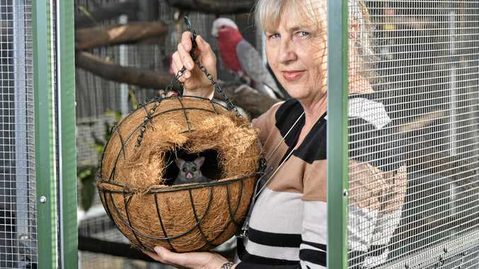 DAMAGE: Wildlife carer Beverley Clarke is concerned about the impacts of cats on native wildlife.