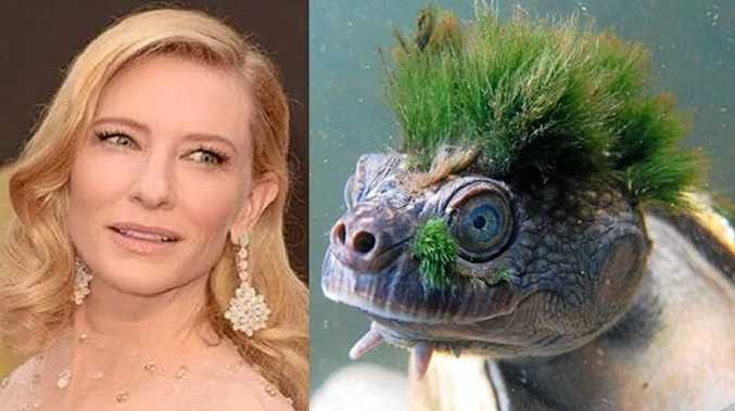 CELEBRITY TO THE RESCUE: Cate Blanchett will be standing up for our very own Mary River turtle in a new 'Save Ugly' campaign promoted by the Wilderness Society.