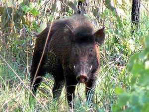 Perrett tells KAP 'we don't need another study on ferals'