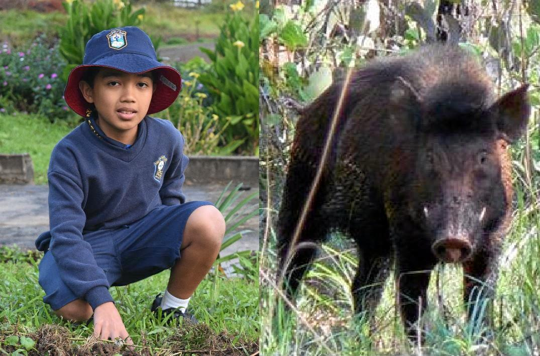 LUCKY ESCAPE: Gympie schoolboy Neil Macalisang had a terrifyingly close call with a feral pig this month.