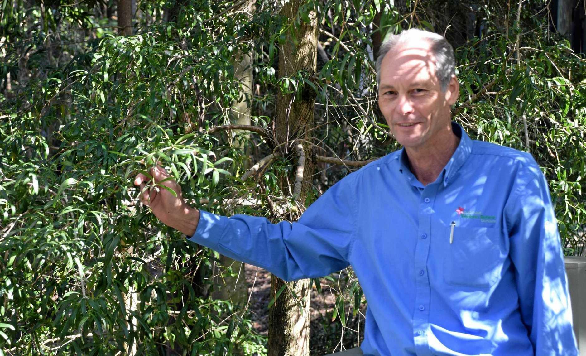 SEASONAL BOTANY: Brent Braddick, Tondoon Gardens Curator