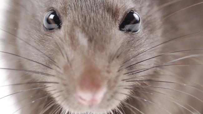 Rats dines on $25,000 meal in ATM.