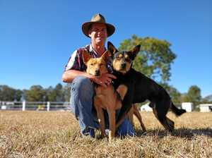 400 people, dogs, cows and campers: Tiny town's big event