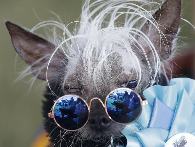 Rascal Deux, a genuinely cool dog. Picture: AP