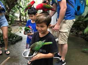 BIRD FRENZY: The author's grandson Taj feeds