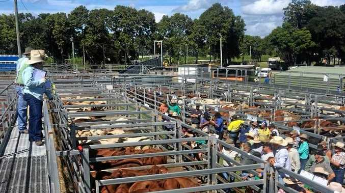 SALE TIME: Landmark's June Cattle Sale will be at the Sarina Showgrounds  from 10am today.