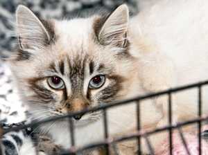 PETS: Friendly felines up for adoption
