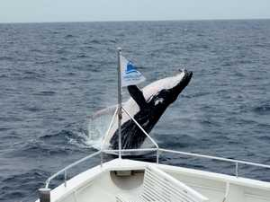 Spyhopping whale stuns tourists off boat