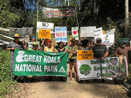 Locals and members of Bellingen Environment Centre (BEC) are joined by Greens MP Dawn Walker in taking action against Forestry Corporation's logging in Gladstone State Forest, in what they say was an attempt to protect koala habitat.
