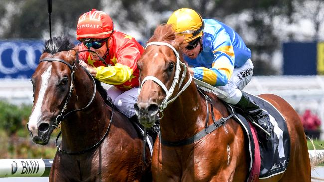 Top colt Performer (right) will be aimed at the Golden Rose in the spring. Picture: AAP