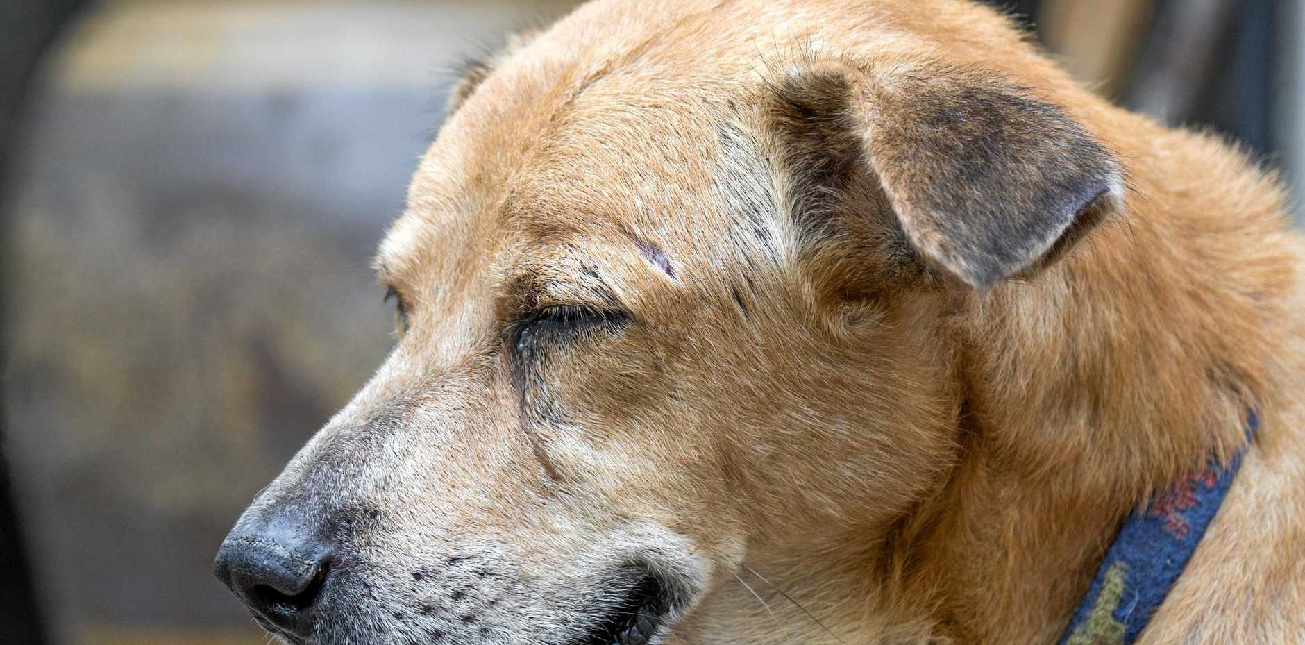 A report released by RSPCA has ranked the Sunshine Coast suburbs which received the most complaints of animal abuse.