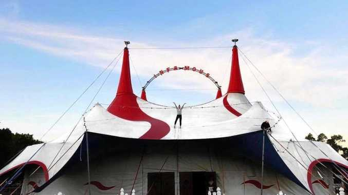 BIG TOP: Brooke Lawrie iwho s a dancer for the Infamous show run by Ashton Circus stand on top of the performance venue.