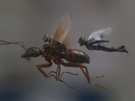 Antman and The Wasp in action.