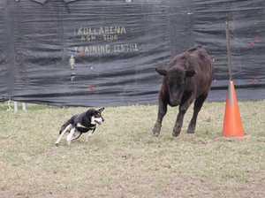 Ulmarra Dog Trial 2018