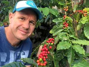 Bundy's first commercial coffee beans are brewing