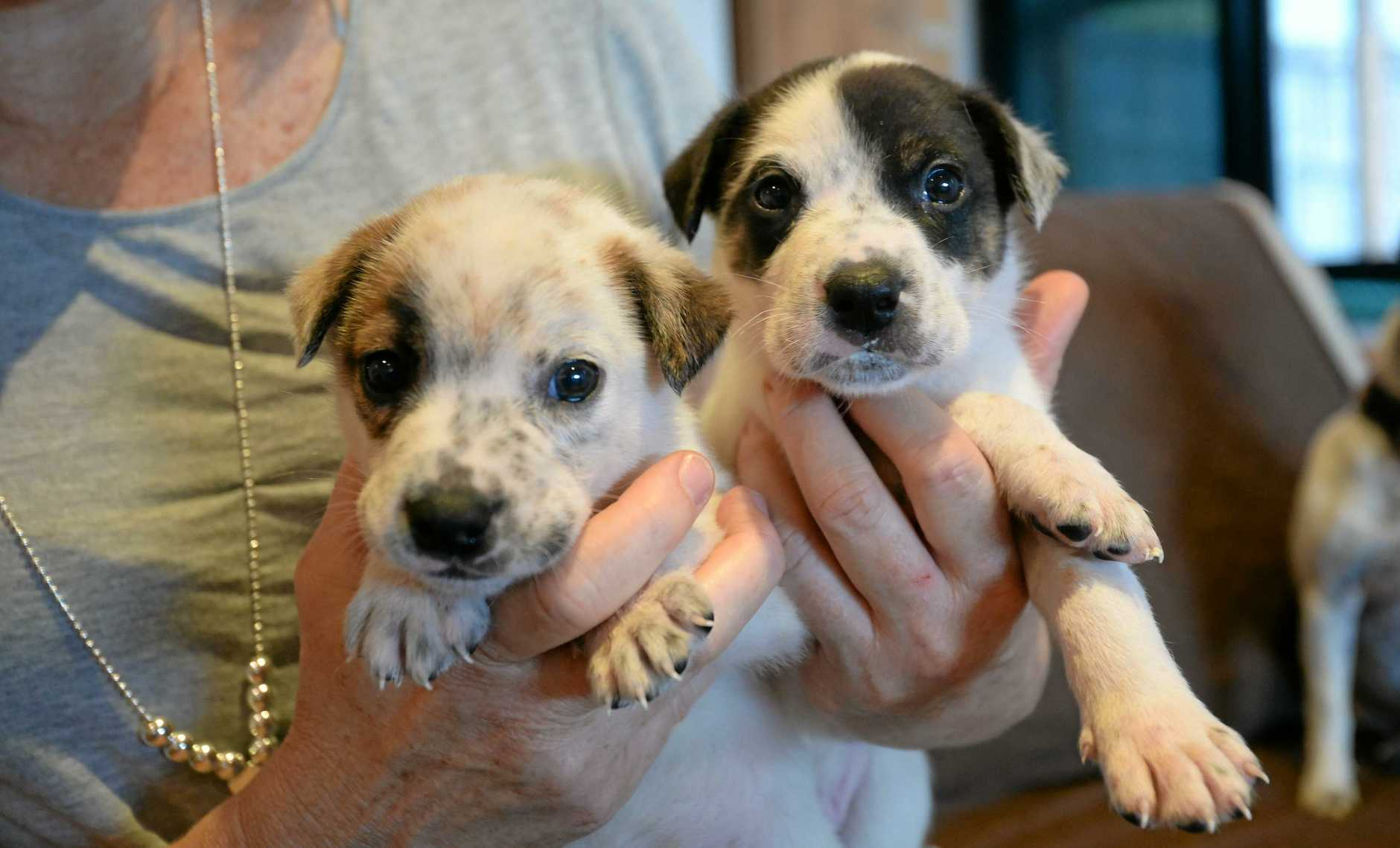 Two surviving puppies.