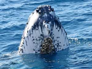 Whales are heavier than even the fines meant to protect them