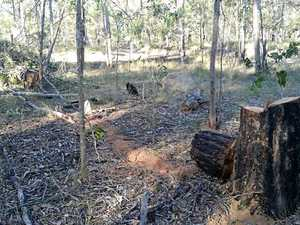 More trees felled in protected area