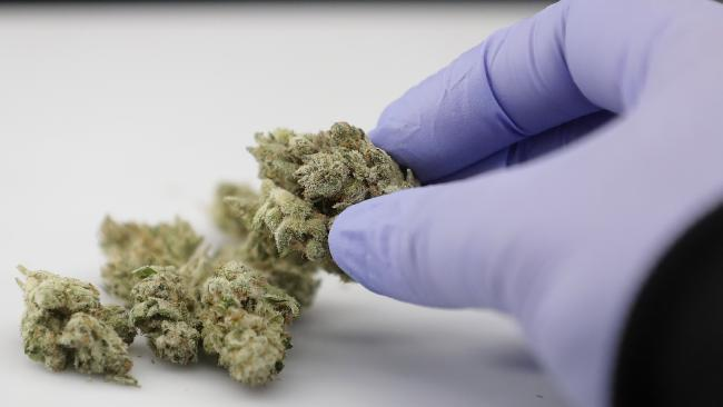 A laboratory manager demonstrates how she uses an instrument to photograph cannabis samples. Picture: Jeff Chiu/AP Photo
