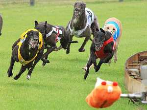 Grey area: Tweed Heads Coursing Club future still up in air