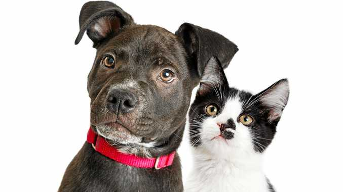FUN WITH FFURRY FRIENDS:THE Gold Coast Pet and Animal Expo is on on tJuly 14 and 15 at the Gold Coast Convention Centre.