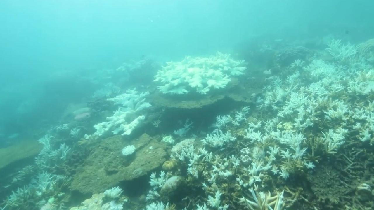 Underwater vision of bleaching on the Great Barrier Reef, off Port Douglas taken on June 28, 2018. Source: Climate Council.