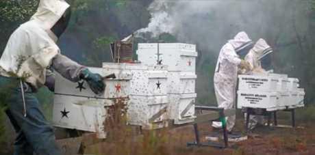Goomboorian Gold beekeepers