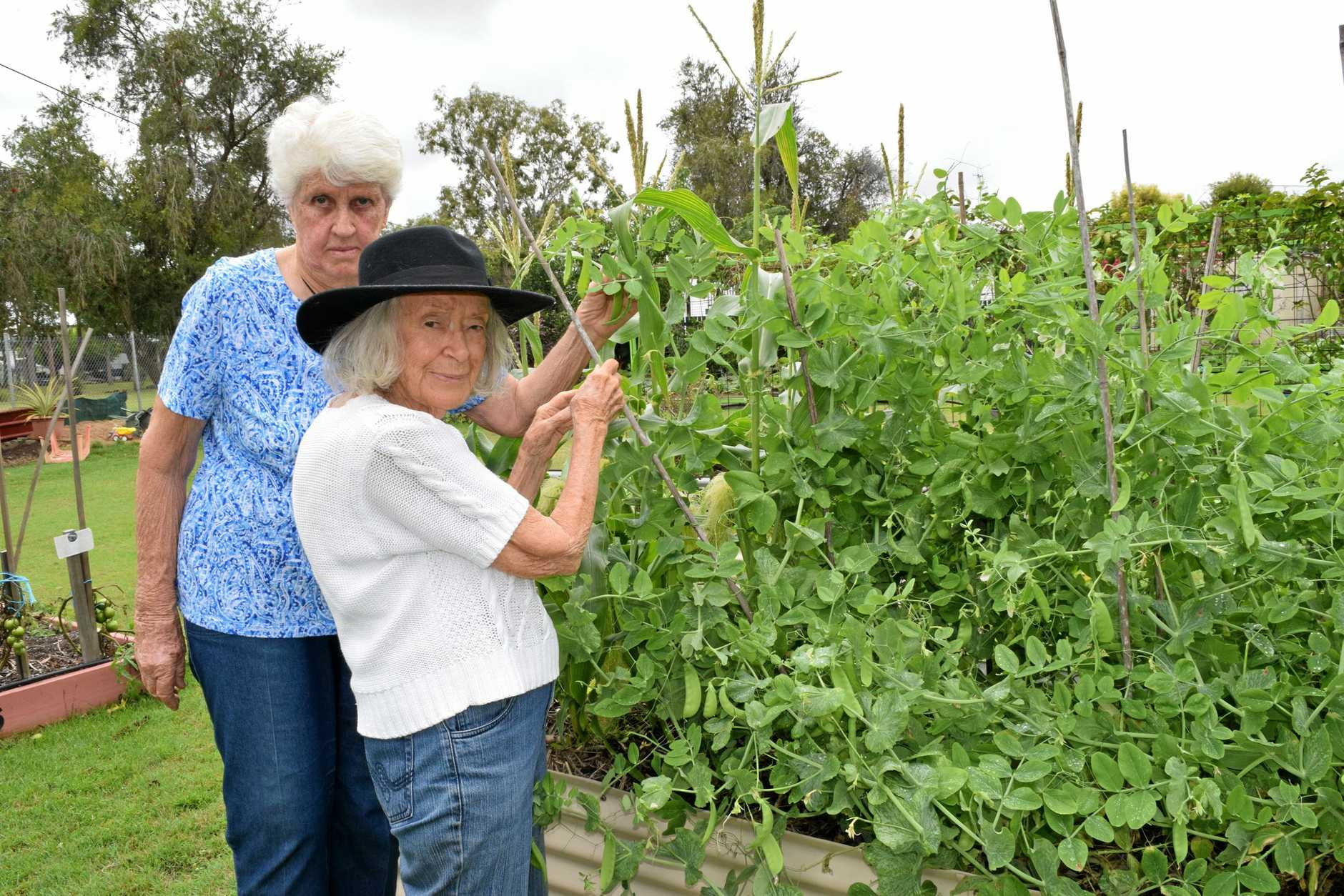 GARDENER'S WOES: Lupton Park Community Garden committee members Dot Leitner and Freda McLintock fear the garden may close because the committee is unable to afford a recent rates bill.