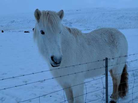 On the surface this might not look as impressive as the others, but the Pixel nailed the whites of this horse and the Icelandic snow. Something the Galaxy Note8 which was also with me struggled with, turning it very blue. Picture: Harry Tucker