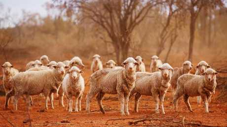 Many Aussie farmers are suffering from drought. Picture: News Corp Australia