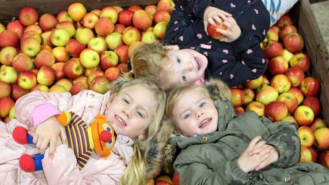 F IS FOR FRUIT: The Savio grand kids were filmed by Sesame St at Savio's Orchard. Emma Savio, Charlotte Savio and Caitlyn Salter.