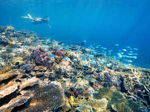 Tourism driving Southern Great Barrier Reef economy