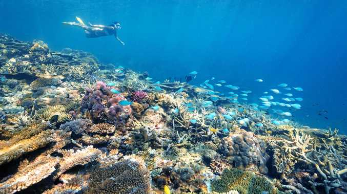 DRAWCARD: Snorkelling off Heron Island is popular with tourists.