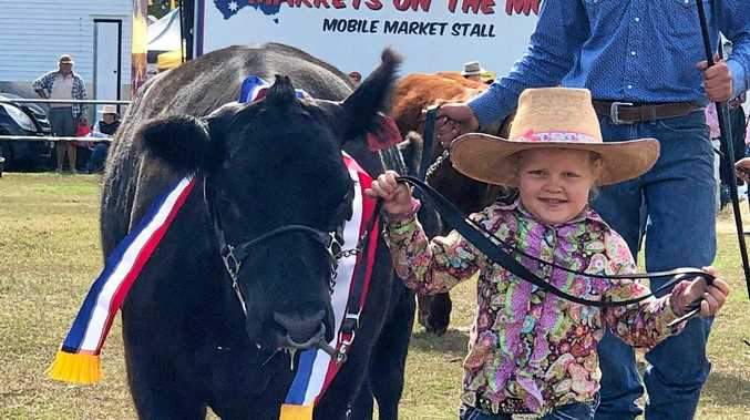 SUPREME EXHIBIT: Macie Iseppi, 4, from Lowood, leads Colombo Park Kismit at the Laidley Show at the weekend for Vitulus Stud principal Margo Hayes, of Thornton.