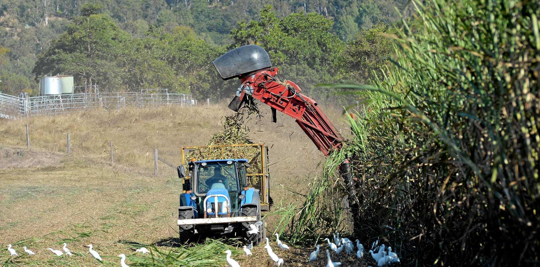 Cane harvesting along the Mackay-Eungella road near Pinaccle